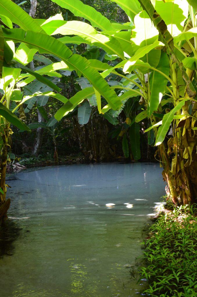 Tropical scene of Jalapão